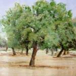 essential oil Melaleuca alternifolia tree